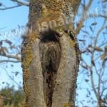 arbre des berges du Verdon, Vinon-sur-Verdon