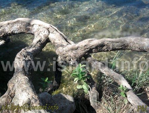 Esparron-de-Verdon (04) bord du lac 21.6.14 © PhI