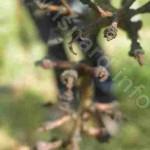 vigne 34 une (c) PhI