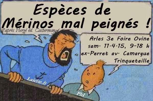 Espèces de Mérinos (13) Arles Foire 4.15