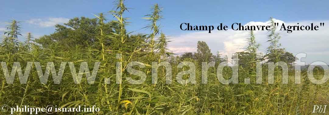 Chanvre Agricole (04) bandeau PhI (c)