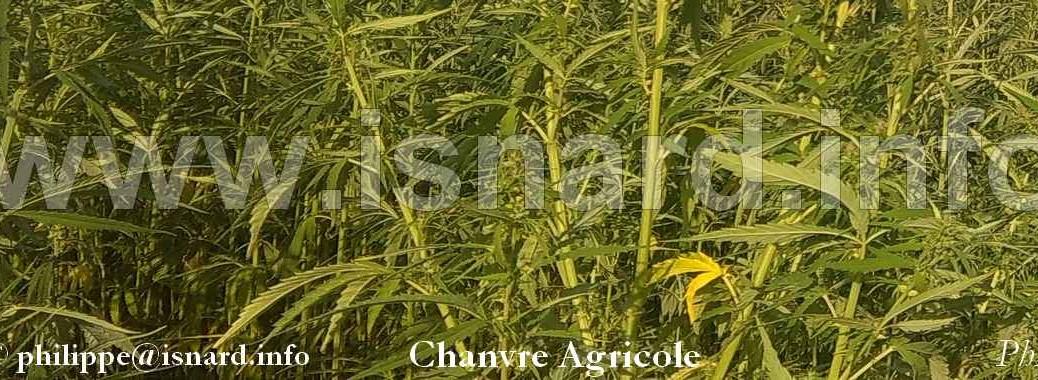 Chanvre Agricole, détail, 7.15 (c) PhI