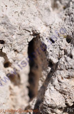 fissure de roche (c) PhI