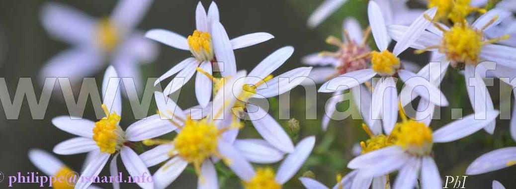 bando Fleurs (83) Vinon 16.10.13 (c) PhI