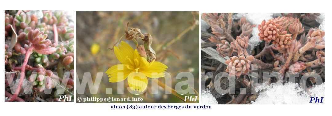 bando Vinon (83) végétal autour des berges du Verdon
