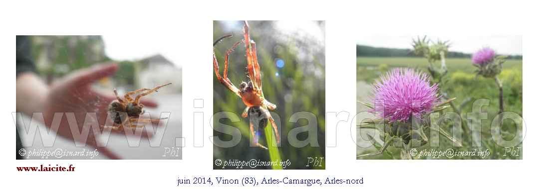 bando Vinon (83) & Arles 5.14 (c) PhI 8.16
