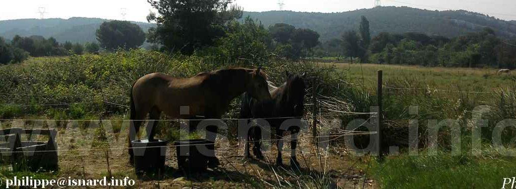 chevaux (84) bando (c) PhI