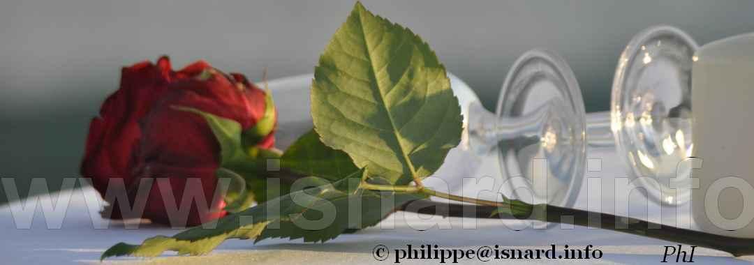 à Fréjus (83) au bord de mer, une rose... 14.5.17 © PhI