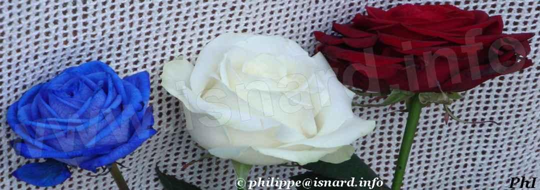 bando 3 roses BBR (04) Allemagne-en-Provence © PhI