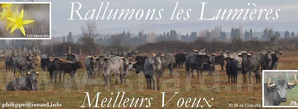 bando Voeux 2019 toros gris (13) en Crau © PhI