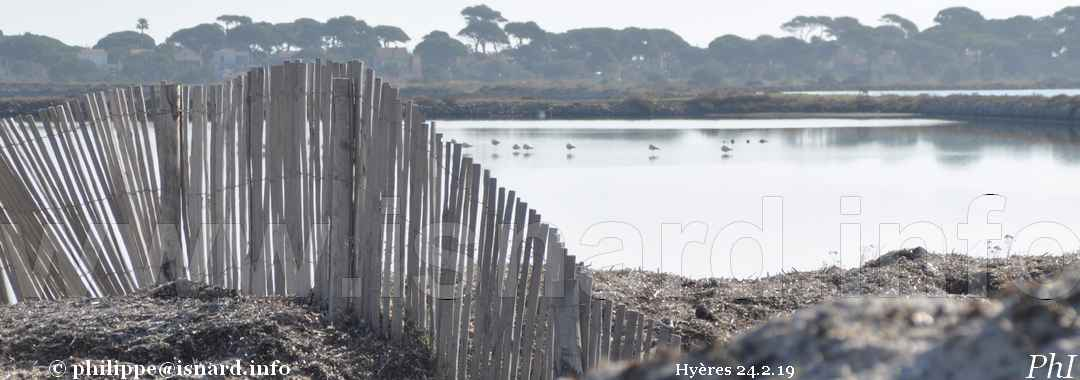 Hyères (83) route du sel 24.2.19 © PhI