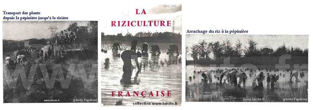 Riziculture française Camargue 1961-62 bando archives © Laicite.fr