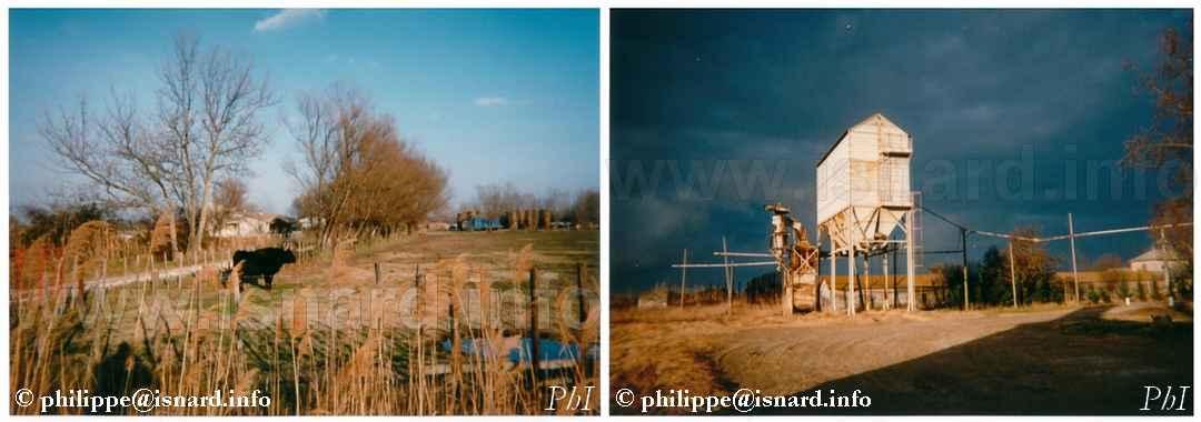 Toro & silo de Riz (13) Sambuc-Arles Camargue © PhI