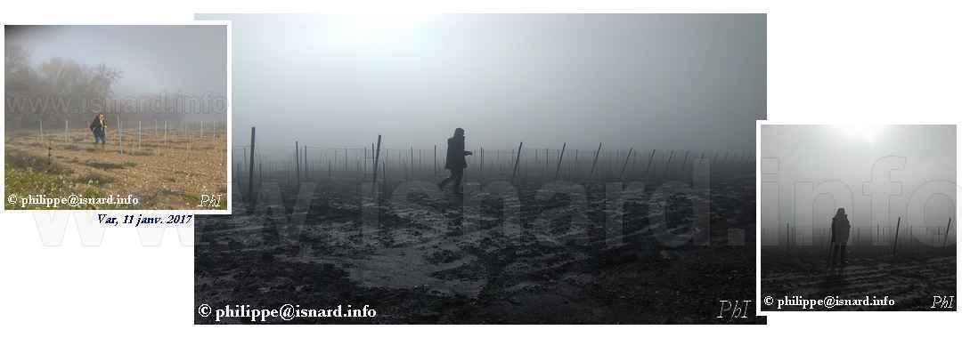 Dans les vignes 11.1.17 Var © PhI