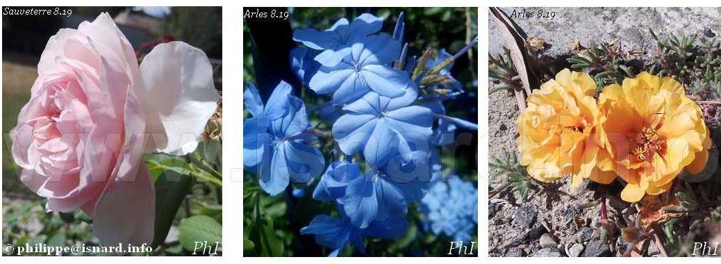 fleurs 3 couleurs, Arles-Trinquetaille (13), Sauveterre (30), 8.19 © PhI