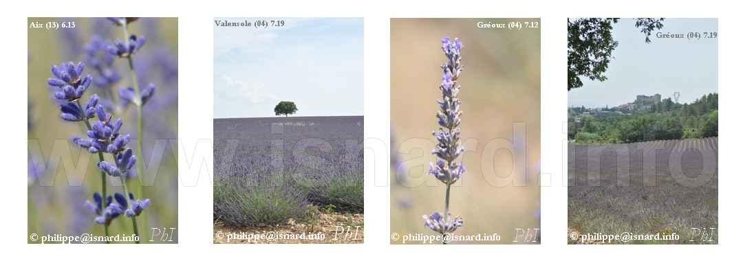 Lavande (04) Gréoux & Valensole, (13) Aix 2012-2019 © PhI