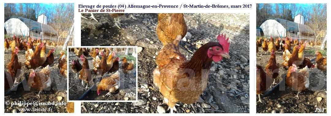Elevage avicole (04) Allemagne-en-Provence / St-Martin-de-Brômes 26.3.17 © PhI