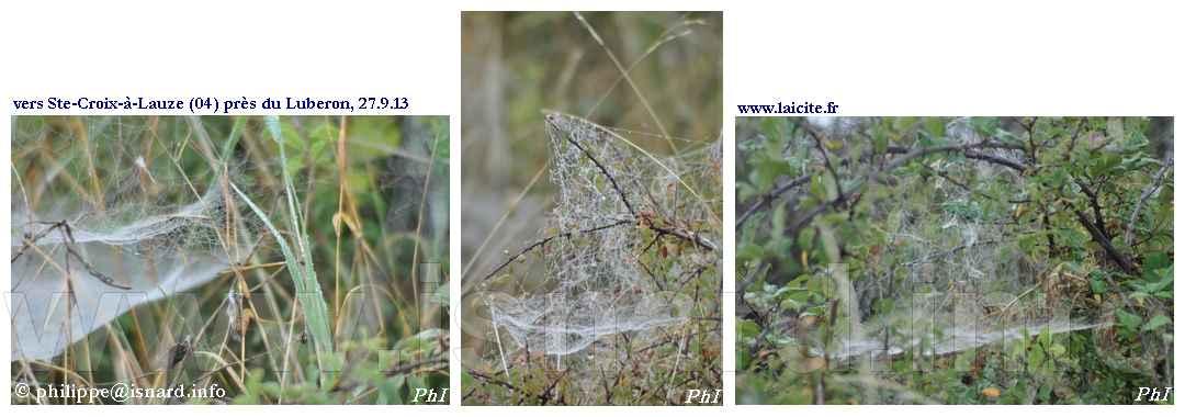 Toiles d'araignée (04) Ste-Croix-à-Lauze 9.13 © PhI