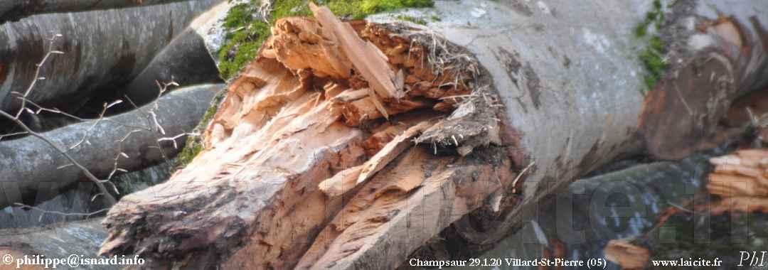 coupe de bois, Champsaur 29.1.20 Villard-St-Pierre © PhI