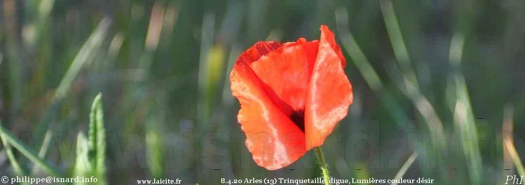 Arles (13) sur la digue de Trinquetaille, Lumières couleur désir 8.4.20 © PhI