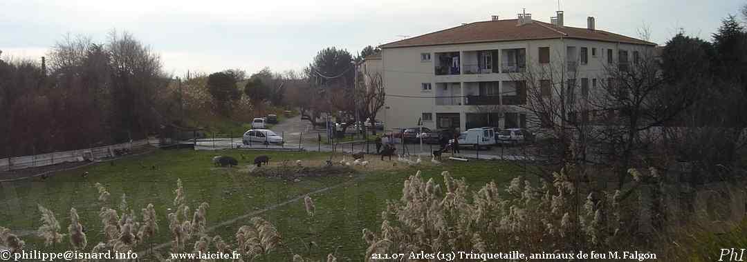 Ancien élevage de feu J.-Louis Falgon (13) Arles Trinquetaille 21.1.07 © PhI