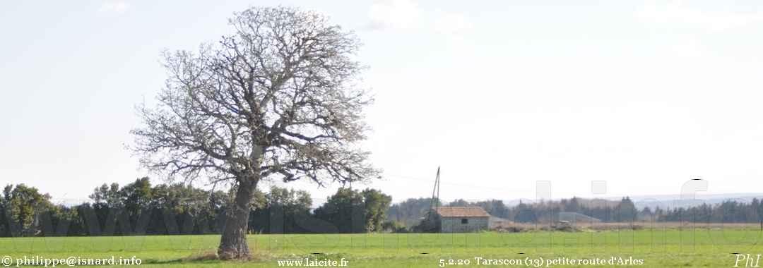 Sur la petite route d'Arles à (13) Tarascon 5.2.20 © PhI