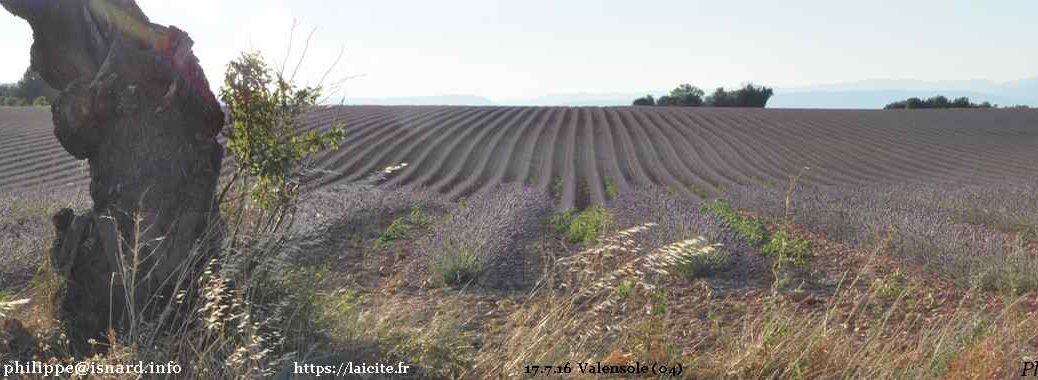 Plateau de Valensole (04) 17.7.16 © PhI