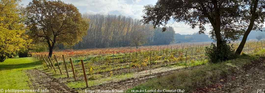 vignes aux couleurs d'automne (84) Loriol-du-Comtat 12.11.20 © PhI
