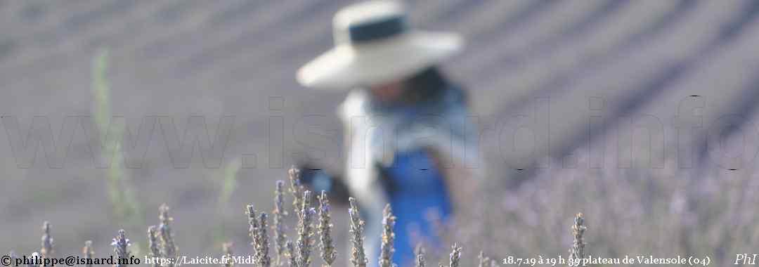 plateau de Valensole (04) lavande et tourisme 18.7.19 © PhI