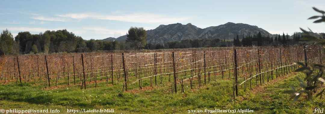 vignes (13) Eygalières 3.12.20 Alpilles © PhI