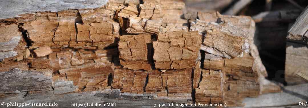 Dans une coupe de bois d'un vallon d'Allemagne-en-Provence (04) 5.4.21 © PhI